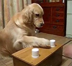 shell-game-dog